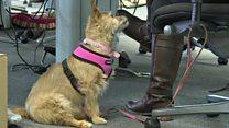 Aprende inglés: Ahora puedes llevar a tu mascota a la oficina en Londres