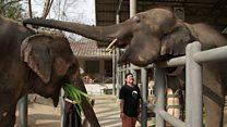 Inside Thailand's elephant hospital