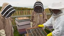 Young bee keepers tell us why they do it