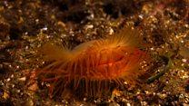 Divers film reef 'destruction'