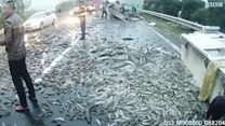 طن من الأسماك يملأ شارعا في الصين