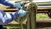 Snake hunter bags 14ft python