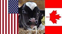 米トランプ政権がカナダの酪農を標的にする理由