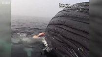Шундай қилиб акула китни ебди уммонда...