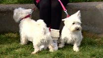 MSPs' pets compete for dog of the year