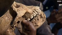 اكتشاف رفات للانسان البدائي عمرها أكثر من 300 ألف عام