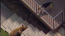 Daring dog chases off bear