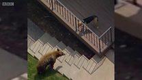 जब कुत्ते ने भालू को खदेड़ दिया