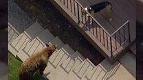 США: пес охороняв дім і прогнав ведмедя