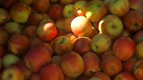 Sunburnt apples vex South African farmers