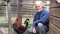 Noisy cockerel owner faces £5k fine