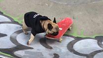 Пес у Лондоні катається на скейтборді