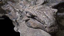 Norosaurus, el impresionante fósil de dinosaurio mejor preservado jamás hallado