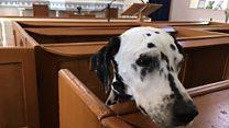 Zennor the churchgoing dog receives special award