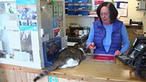 Post office cat retires after 22 years