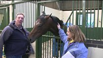 Horse finds BBC sports presenter tasty