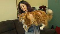 Кіт Омар може стати рекордсменом за довжиною