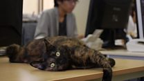 Cats loose in the office