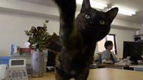 แมวบำบัดความเครียดที่ออฟฟิศญี่ปุ่น