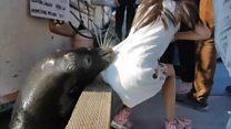Deniz aslanı küçük kızı suya çekti