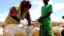 Wanawake wajitosa katika kutibu mifugo Somalia