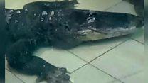 У Миколаєві алігатор-рекордсмен відзначив ювілей