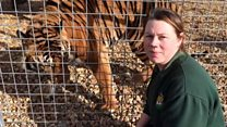'Shining light' zoo-keeper killed by tiger