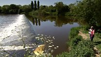 The forgotten fish of the River Severn