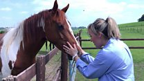 Can horses help humans beat anxiety?