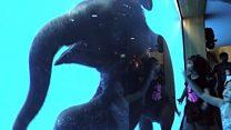Слоненя в акваріумі: шалений успіх у глядачів