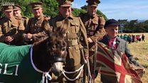 Guernsey's military donkey