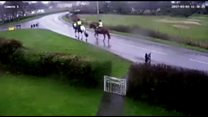 Horse crash driver will not be prosecuted
