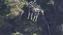 Horse airlifted to vet in LA suburb