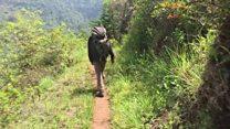 Safari ya kuufikia mti mrefu zaidi Afrika nchini Tanzania