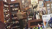 美国加州孔雀大闹洋酒杂货店