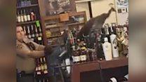 Павич набешкетував у магазині алкоголю на 500$