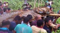 سری لنکن گاؤں میں سیلاب اپنے ساتھ مگرمچھ لے آیا