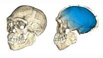 Temuan fosil mengisyaratkan bahwa manusia modern 'berevolusi di seluruh benua Afrika'