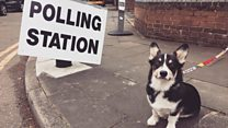 General election: Dogs at polling stations
