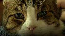 Diabetes-sniffing cat is 'lifeline'