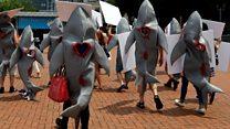 HK shark fin protesters target restaurant