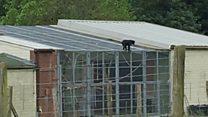 Marwell Zoo on lockdown after monkeys escape