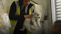 Thousands of animal rescued in Wales