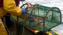Creel fishermen seek inshore trawler ban