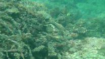 گوادر کا جزیرہِ استولا سمندری حیات کے لیے محفوظ علاقہ