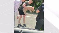 Pigs on motorway