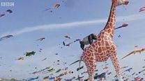Парвоздаги жирафани кўришни истайсизми? Данияга боринг!