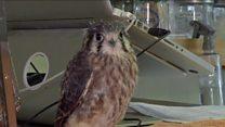 Bird hospital opens in New York