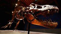 Aktivitas vulkanik 'memicu dimulainya zaman dinosaurus'