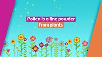 Top tips for beating the Hay fever blues